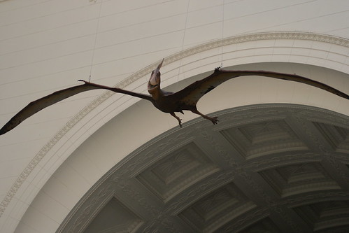 Pterodactyl by quinn.anya, on Flickr