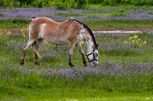 "Caballo • <a style=""font-size:0.8em;"" href=""http://www.flickr.com/photos/20681585@N05/2427055846/"" target=""_blank"">View on Flickr</a>"