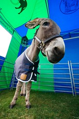 Friendly Donkey!!