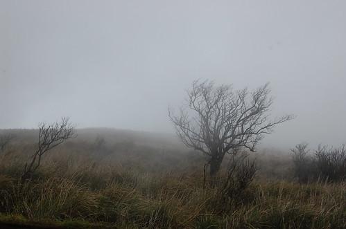 Spooky trees!