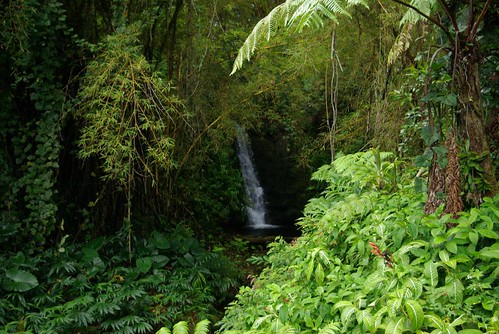 on the trail to 'Akaka Falls