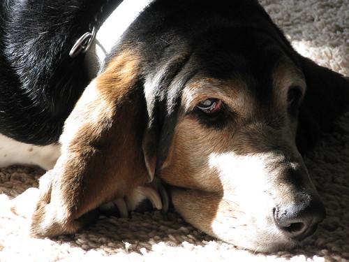 Lady Dog