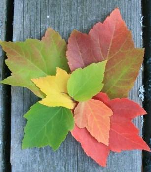 Fall Leaves (18)