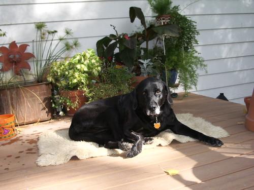 Sophie the Wonder Dog