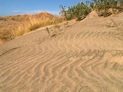 La Paz Sand Dunes Hillside