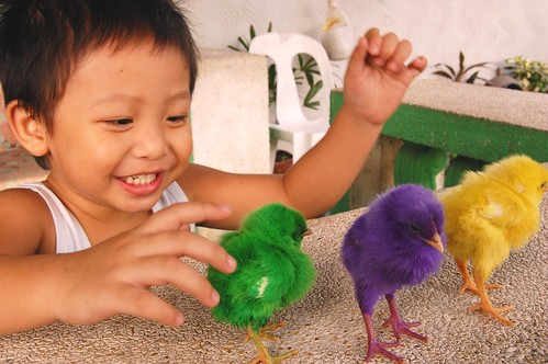boy technicolor chicks Pinoy Filipino Pilipino Buhay  people pictures photos life Philippinen  菲律宾  菲律賓  필리핀(공화�) Philippines