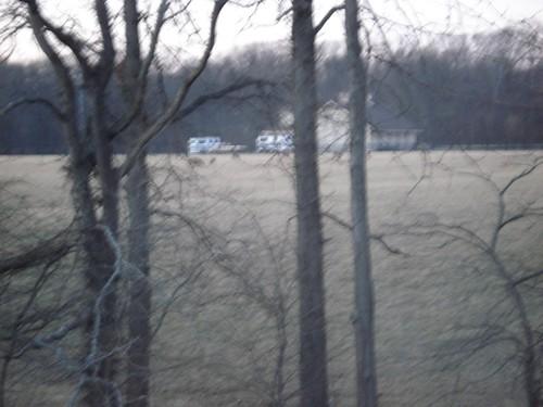 Deer in the field #2