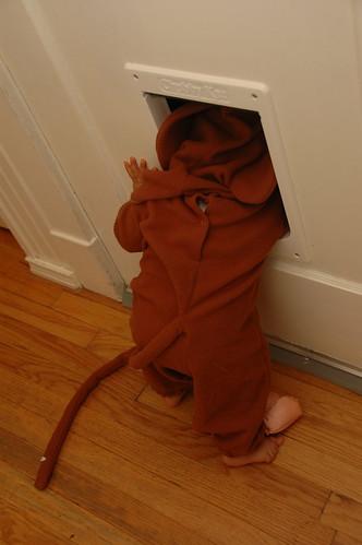 Monkey at the Cat Door