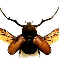 Big Bug II…!!!