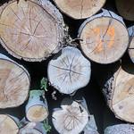 Markierung im Holz