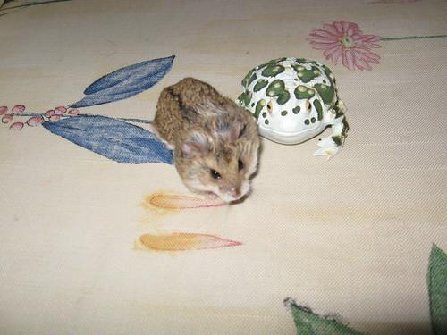 toady & nitty