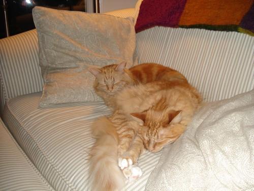Oscar and Simon Together 2