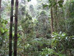 La forêt tropicale de Ranomafana