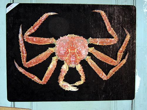 King crab on velvet