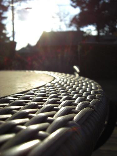 Backyard Musings