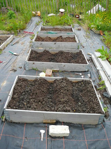 Allotment08 001
