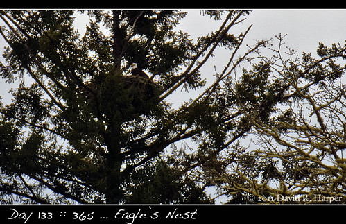 Day 133 :: 365 … Eagle's Nest by Echo9er