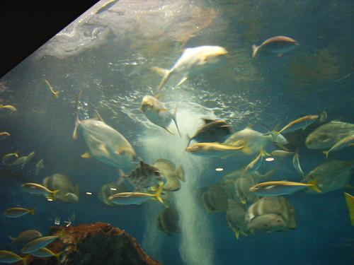 長崎的沿海生物