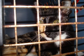Becky_in_carrier_20080305_01x