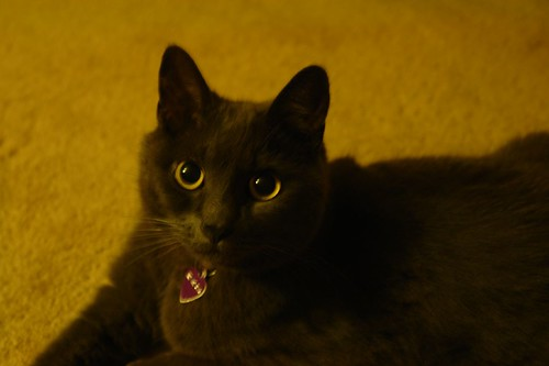 Big Eyed Murphy