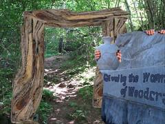 Woodcraft forest