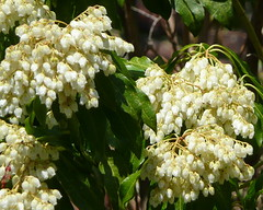 Flowering shrub in sunshine