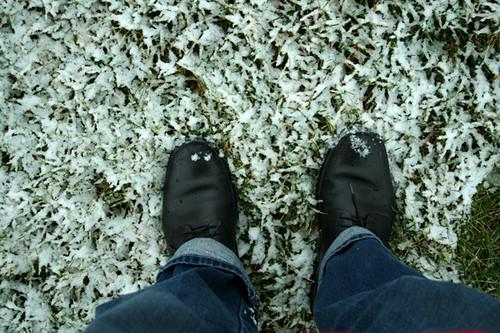Winter's Day in Kokomo 5