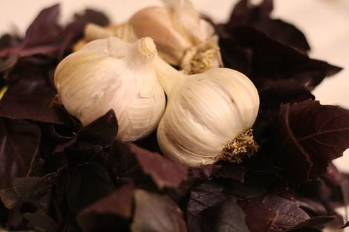 Purple basil with fresh garlic to freeze as pesto
