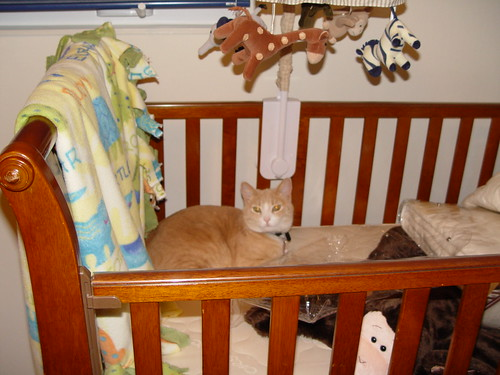 Nutmeg in crib.