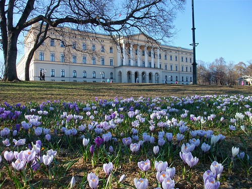 Castle with Crocus