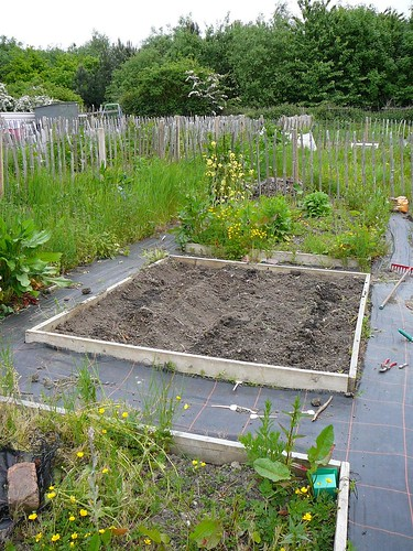 Allotment08 003