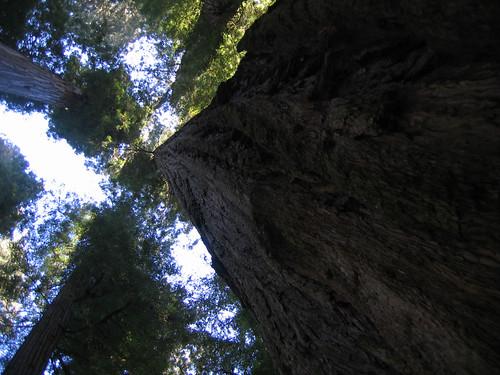 Day 09 - Redwoods