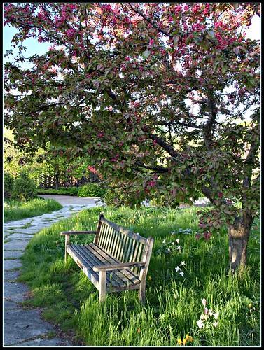 Meadow Garden