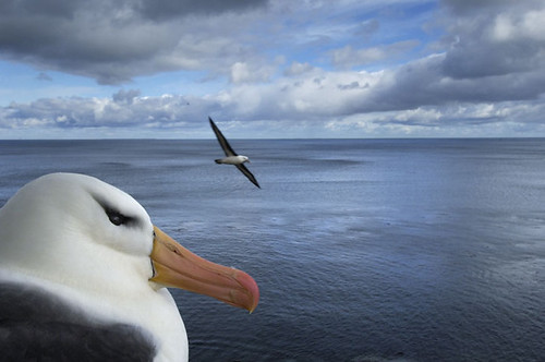 mirada de albatros