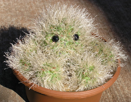 Claude the Cactus