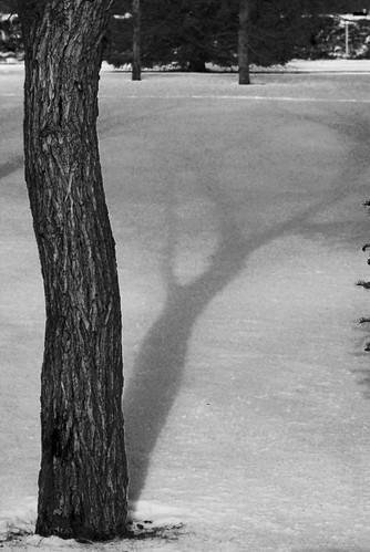 tree shadows 6