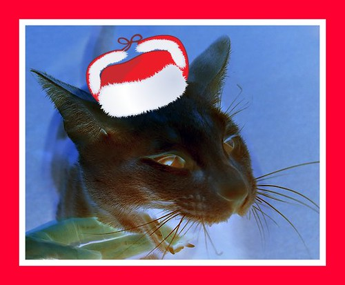 Christmas cat King
