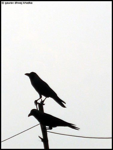 Two crows by Gaurav Dhwaj Khadka