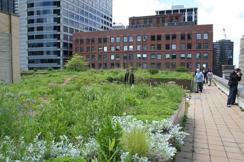 City Hall's green roof