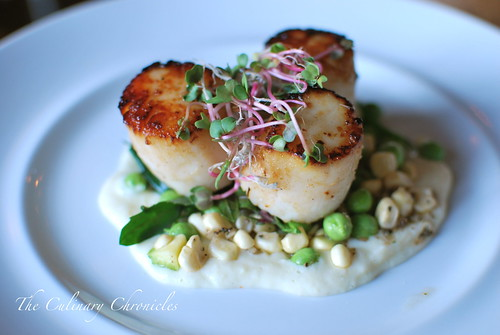 Sea Rocket Bistro: Seared Scallops Special