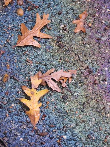 Oil & Leaves
