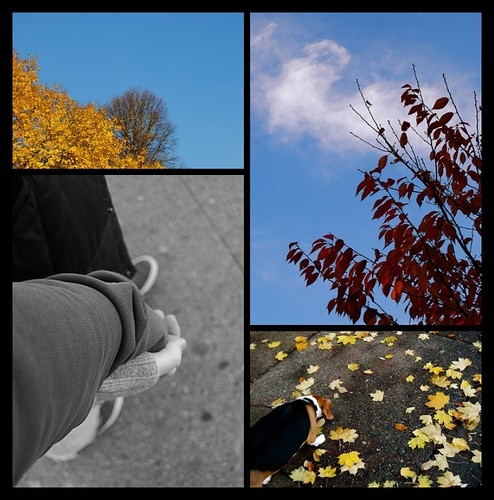 Thanksgiving Morning Edition of My Fall Photo Series (Week 8)