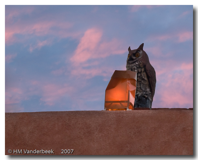 The Owl and The Luminaria