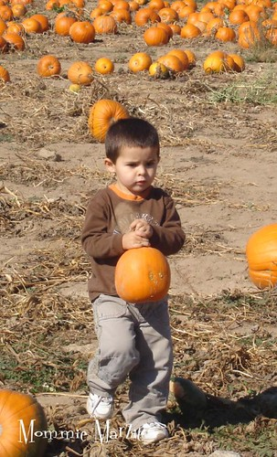 pumpkin patch 5