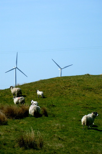 Sheep & Turbines