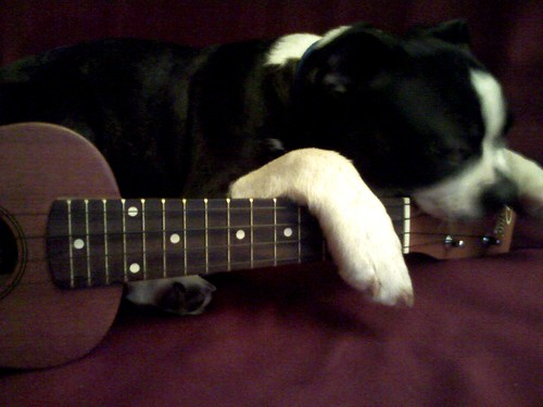 Mojo practices the uke