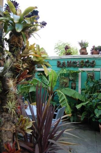 Bromeliad Tree.