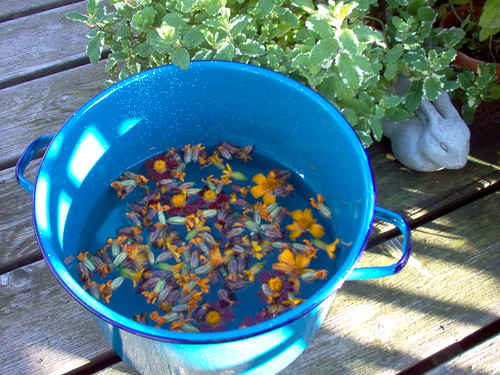 marigolds in dye pot waiting to be made into dye