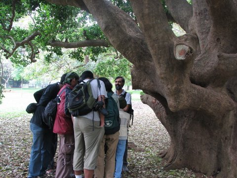 everyone is huddling to see what Karthik is showing under the Ilea paraguensis tree 220308