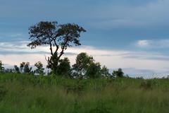 In den Hügeln hinter Bamako